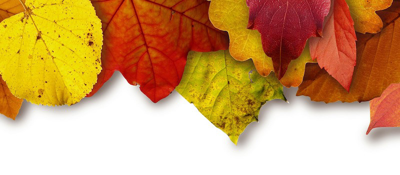 foglie-colorate-autunno-su-superficie-bianca