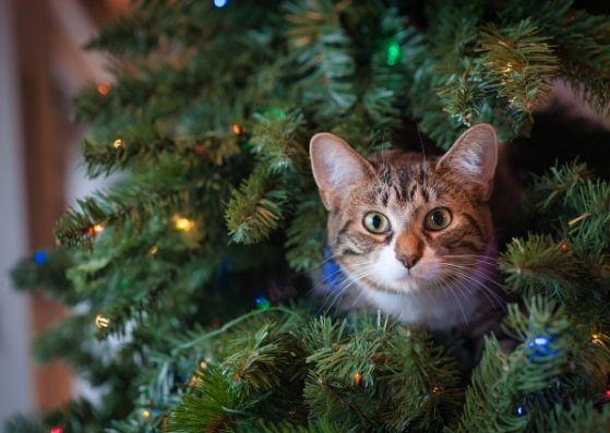 Italian Christmas decoration.