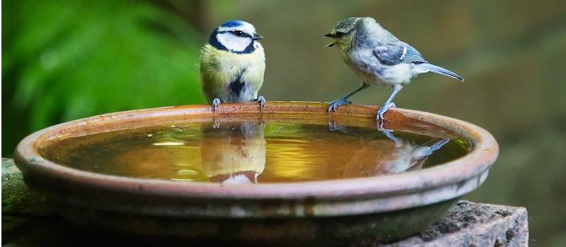 conversazione-uccellini-su-piatto-d'acqua